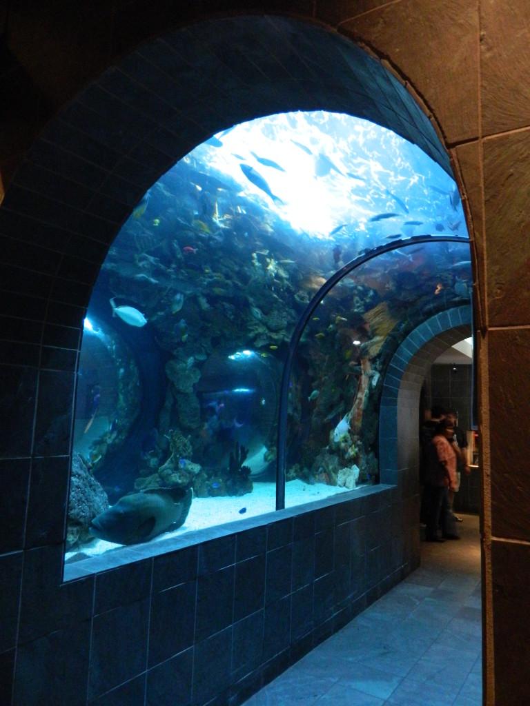 Dallas World Aquarium Patricia