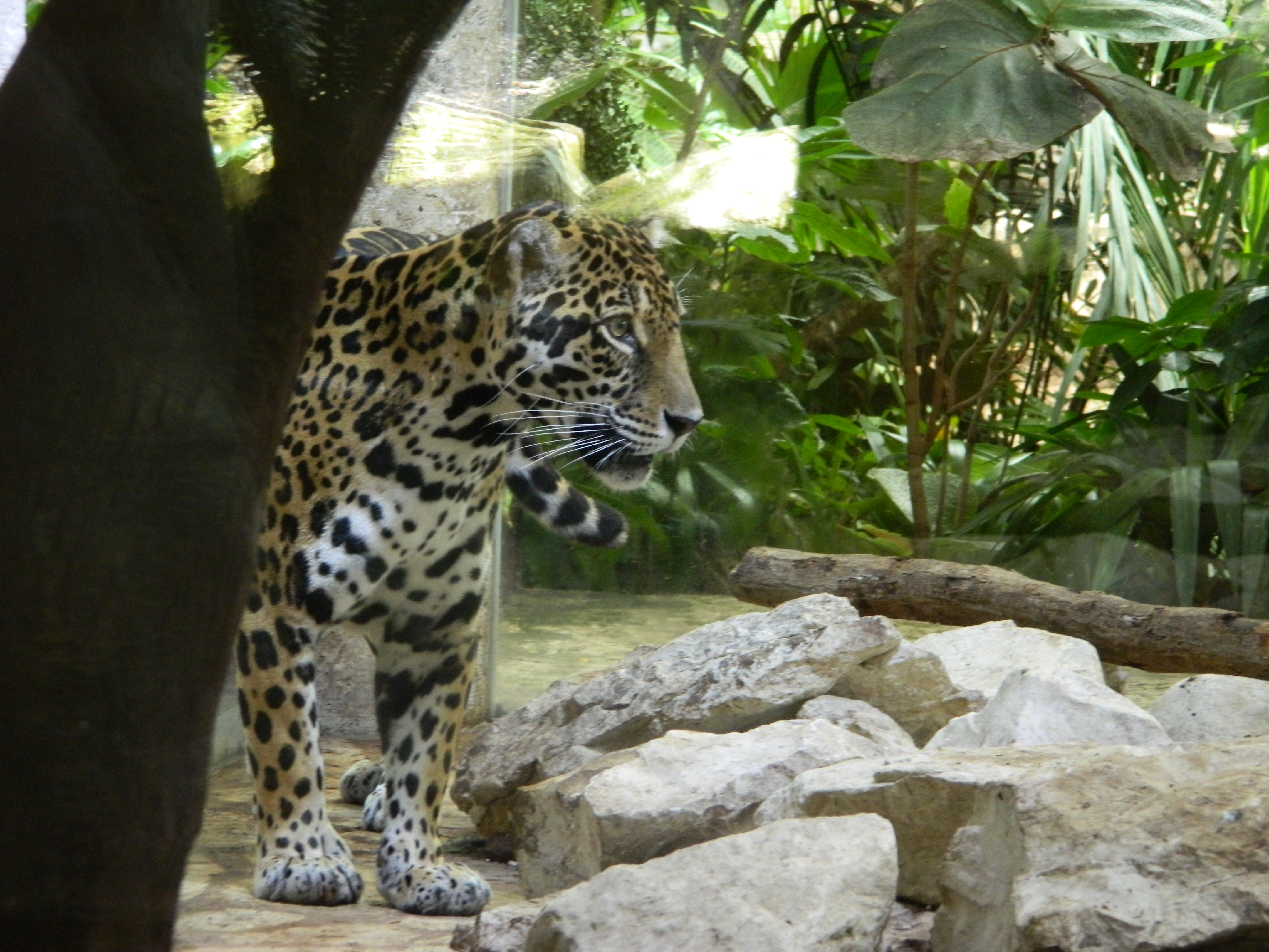 world aquarium patricia of com heatherington dallas jaguar