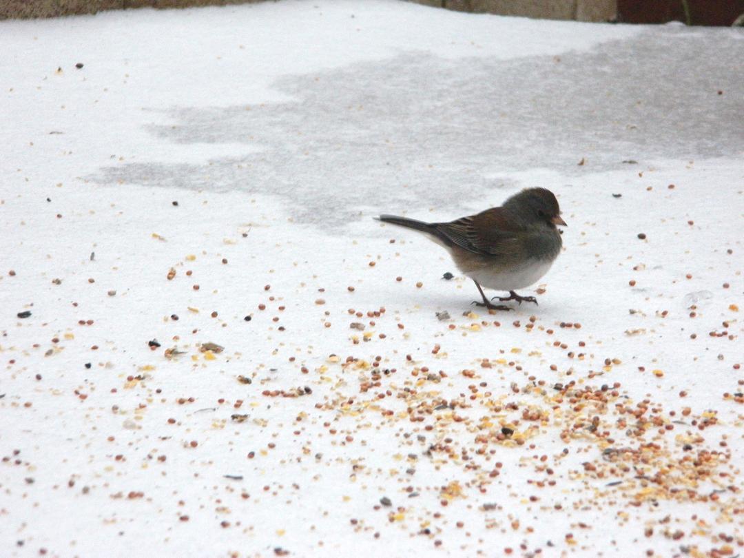 bird and ice