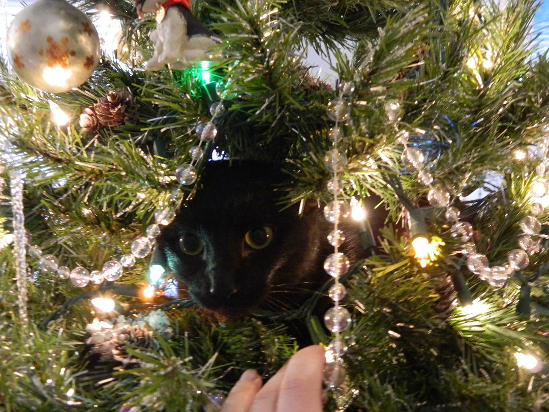 Cat helping in the tree