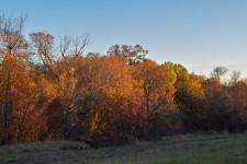 Leaves in Dallas 2