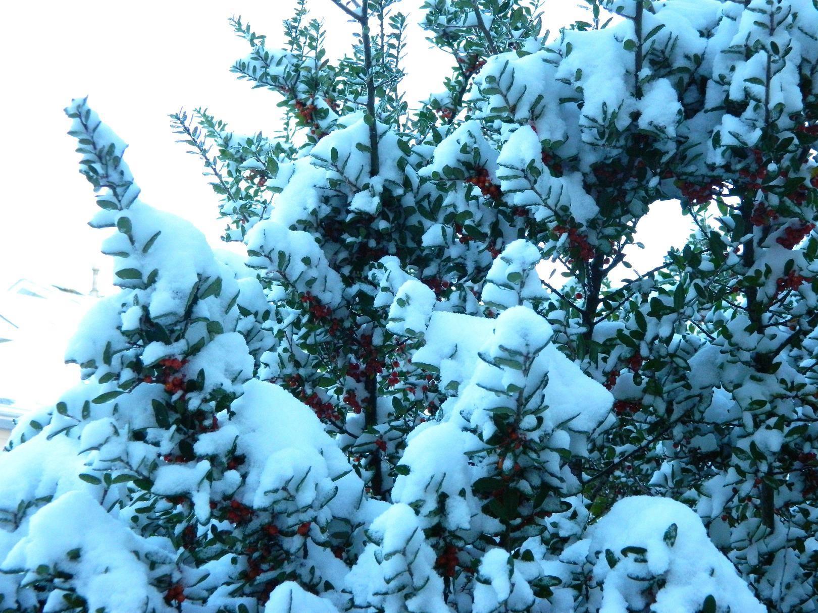 March 2015 Snow