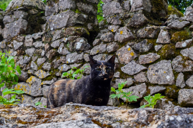 cats Castelo dos Mouros Portugal