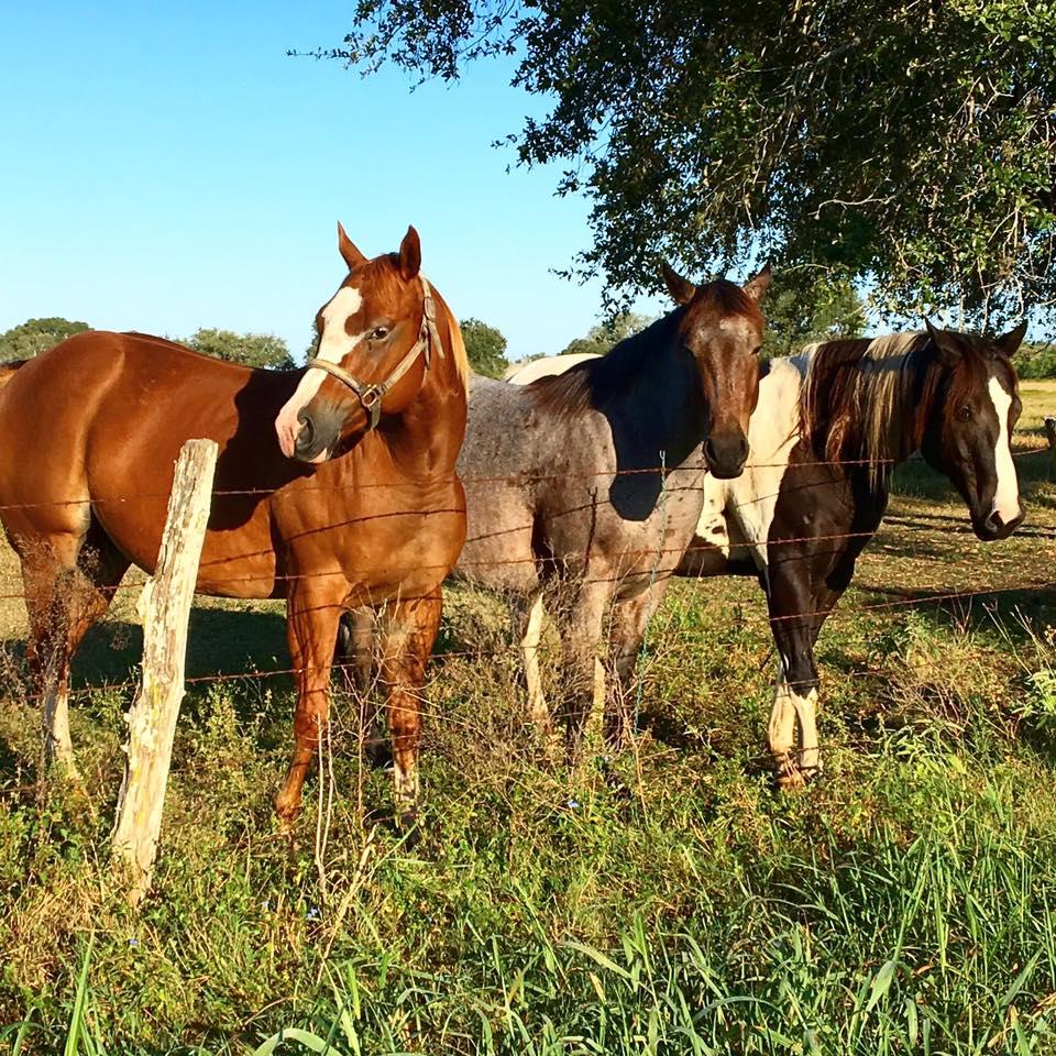 goliad-horses